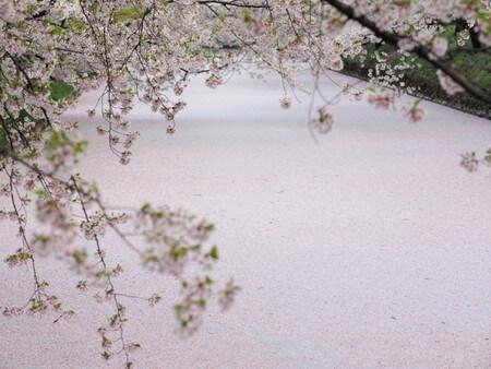 弘前城花筏